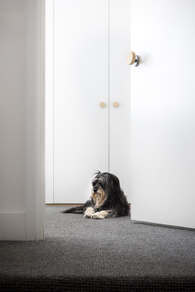 Resident Dog Blog-Nicole England-Bones0414.jpg