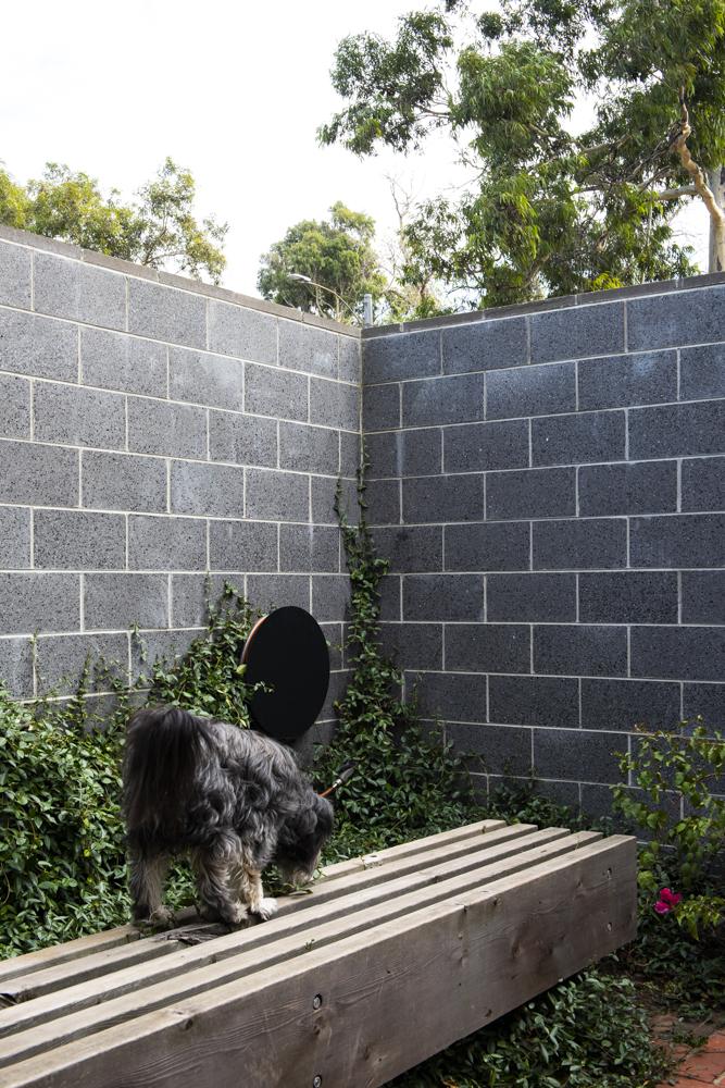 Resident Dog Blog-Nicole England-Bones0180.jpg