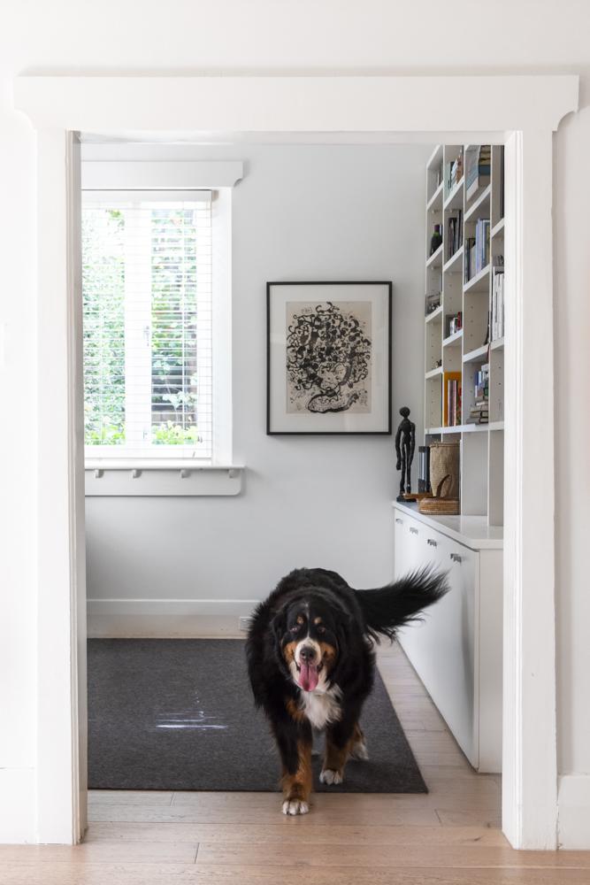 Resident Dog Blog-Nicole England-Meiko0546.jpg