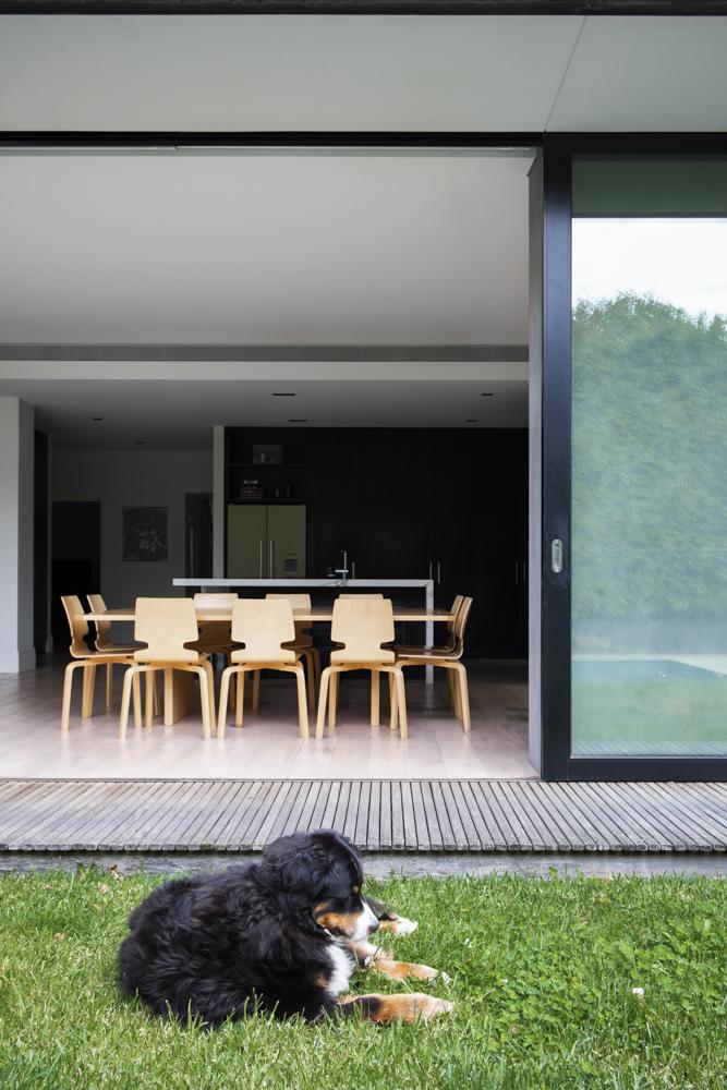 Resident Dog Blog-Nicole England-Meiko0650.jpg
