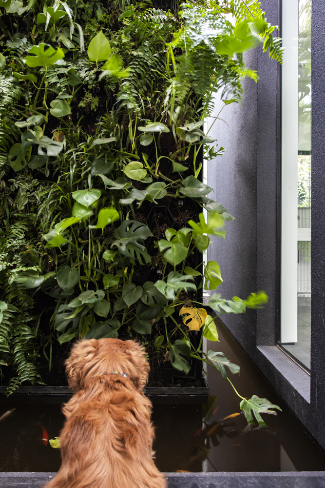 Resident Dog Blog-Nicole England-Leo1727.jpg