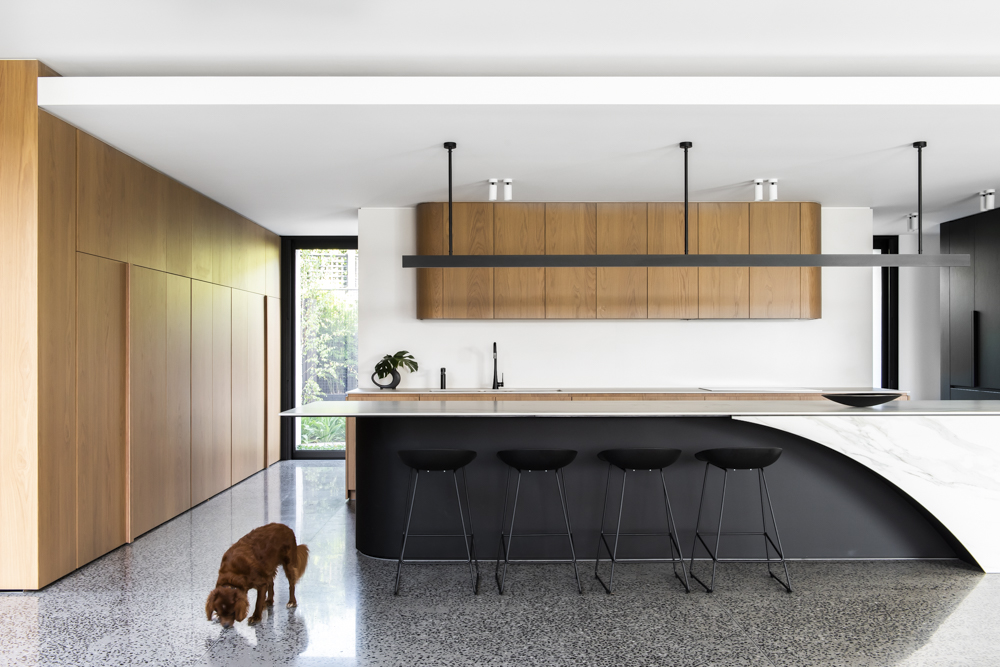 Resident Dog Blog-Nicole England-Leo1501.jpg