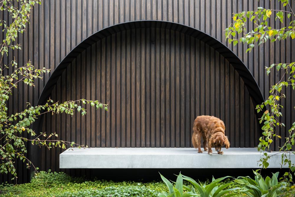Resident Dog Blog-Nicole England-Leo1605.jpg
