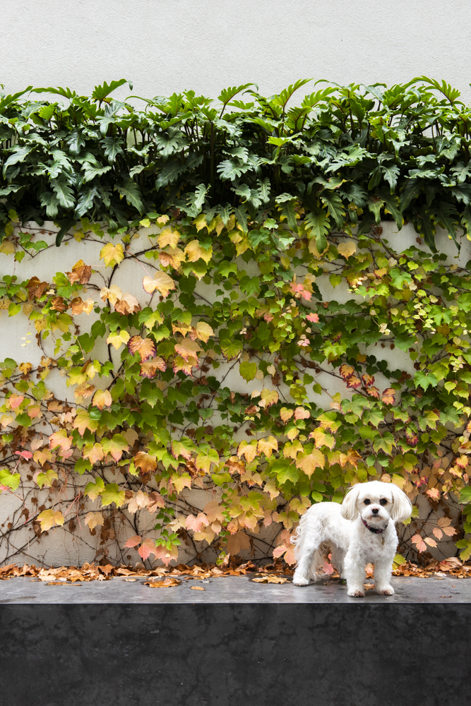 Resident Dog Blog-Nicole England-Coco2054.jpg