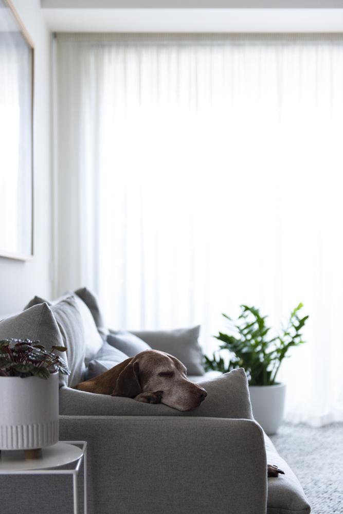 Resident Dog Blog-Nicole England-Indiana3498.jpg