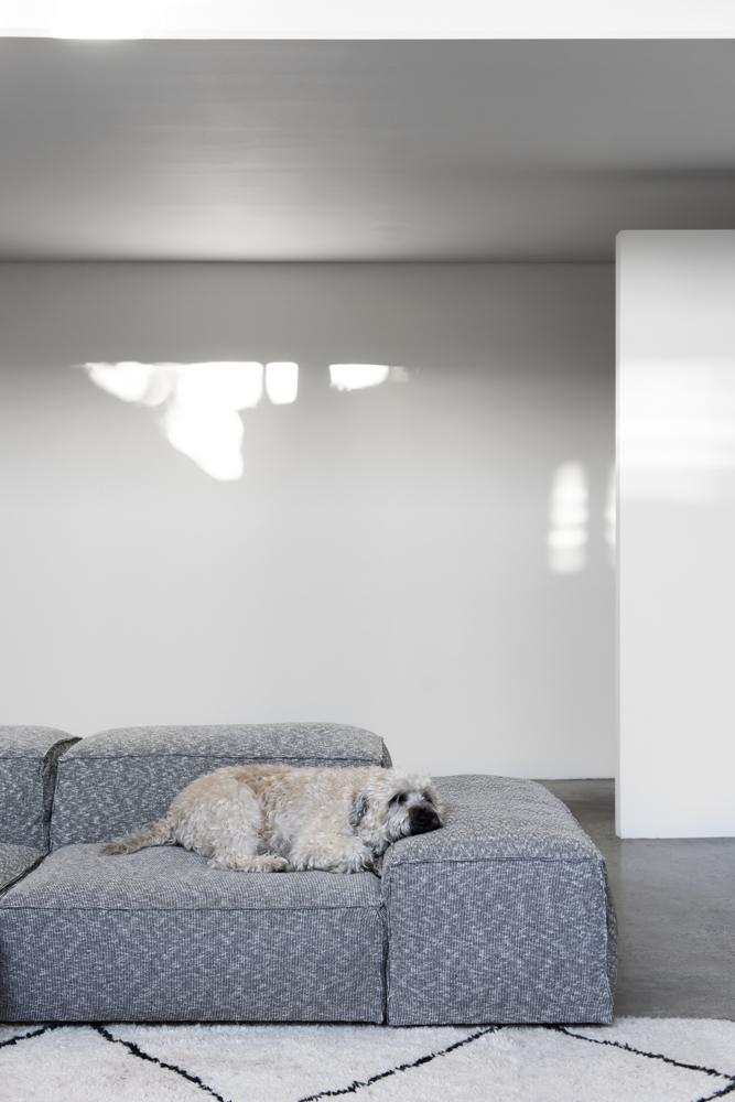 Resident Dog Blog-Nicole England-Albear4856.jpg