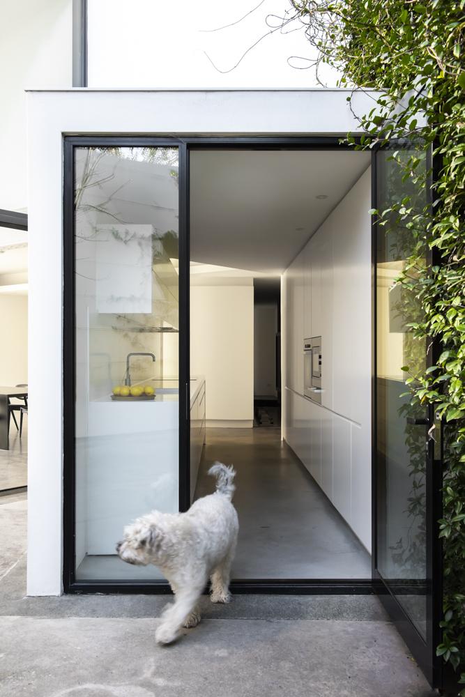 Resident Dog Blog-Nicole England-Albear4671.jpg