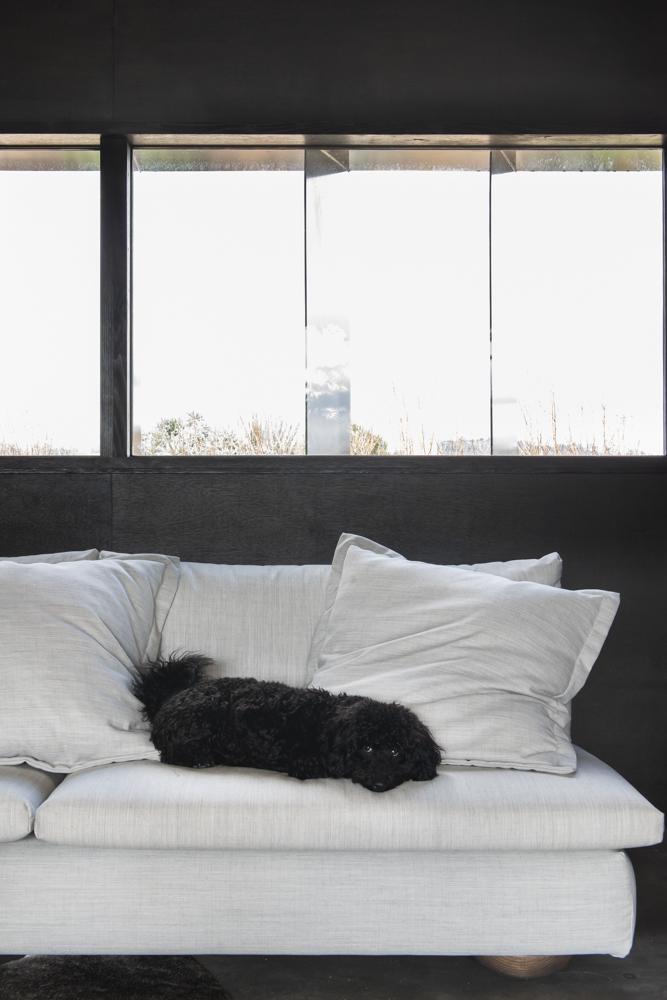Resident Dog Blog-Nicole England-Bonnie4188.jpg