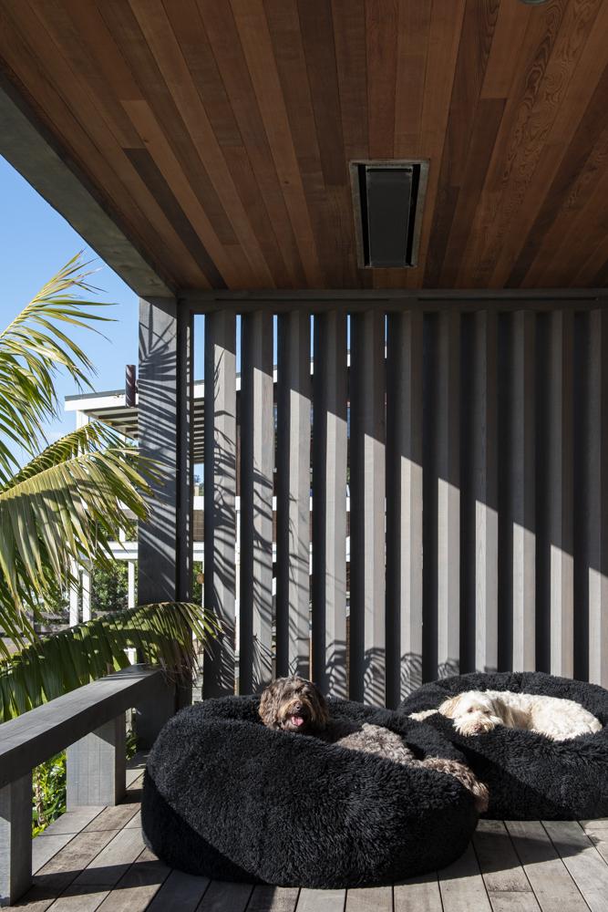 Resident Dog Blog-Nicole England-BrunoandToby-5590.jpg