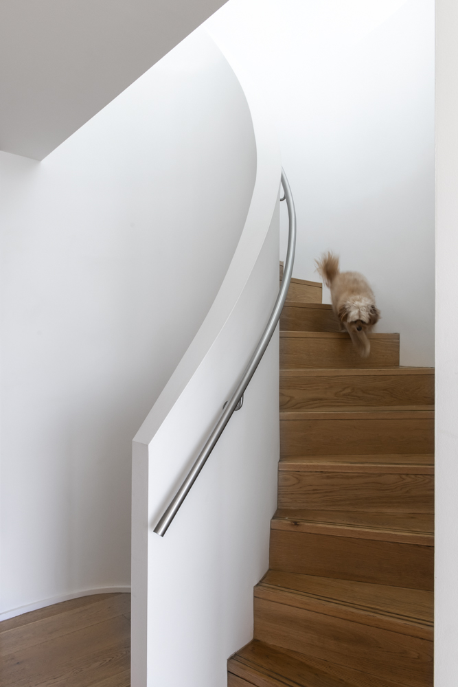 Resident Dog-Nicole England_Sidney_0288.jpg