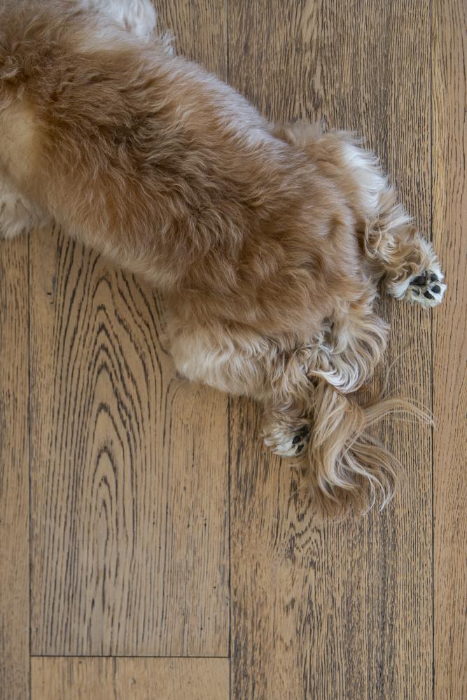 Resident Dog Blog-Nicole England-Albear4745.1.jpg