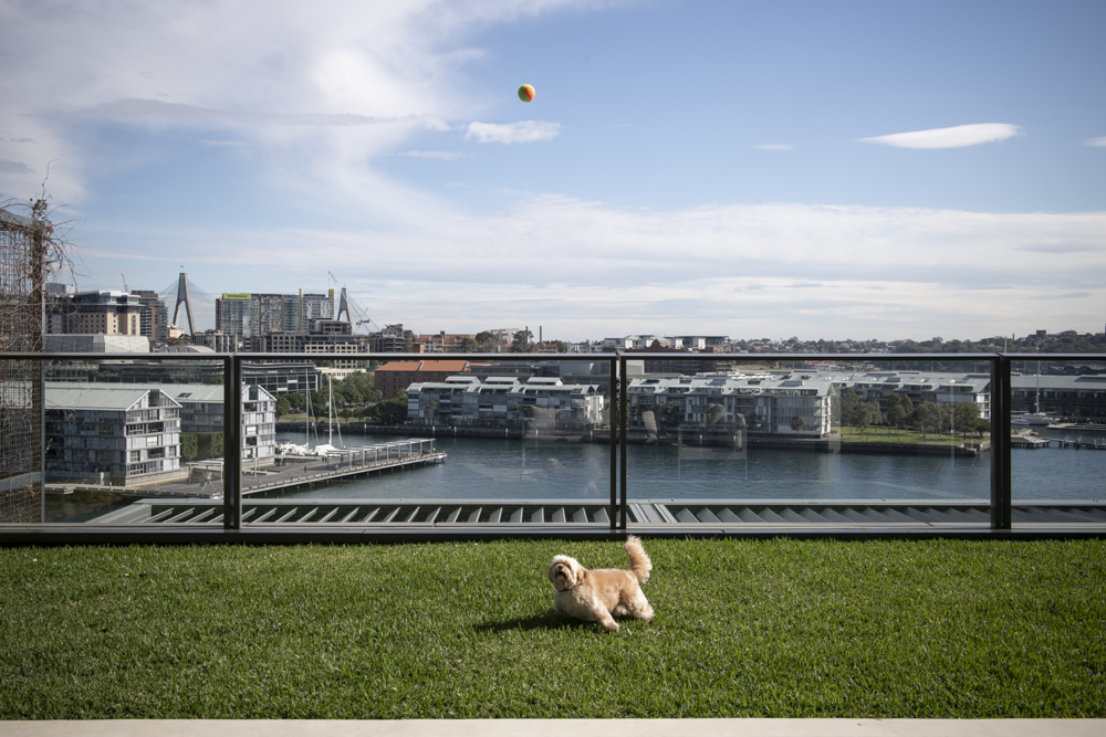 Resident Dog-Nicole England_Sidney_0408.jpg