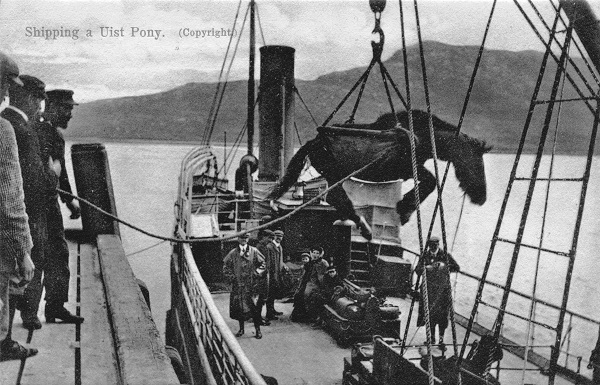 Shipping a Uist pony at Lochmaddy Pier [Scan courtesy of Norman Hudson].