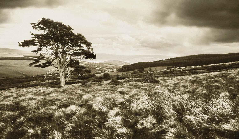 Mountain_Agency_Glasgow_The Glenlivet_012.jpg