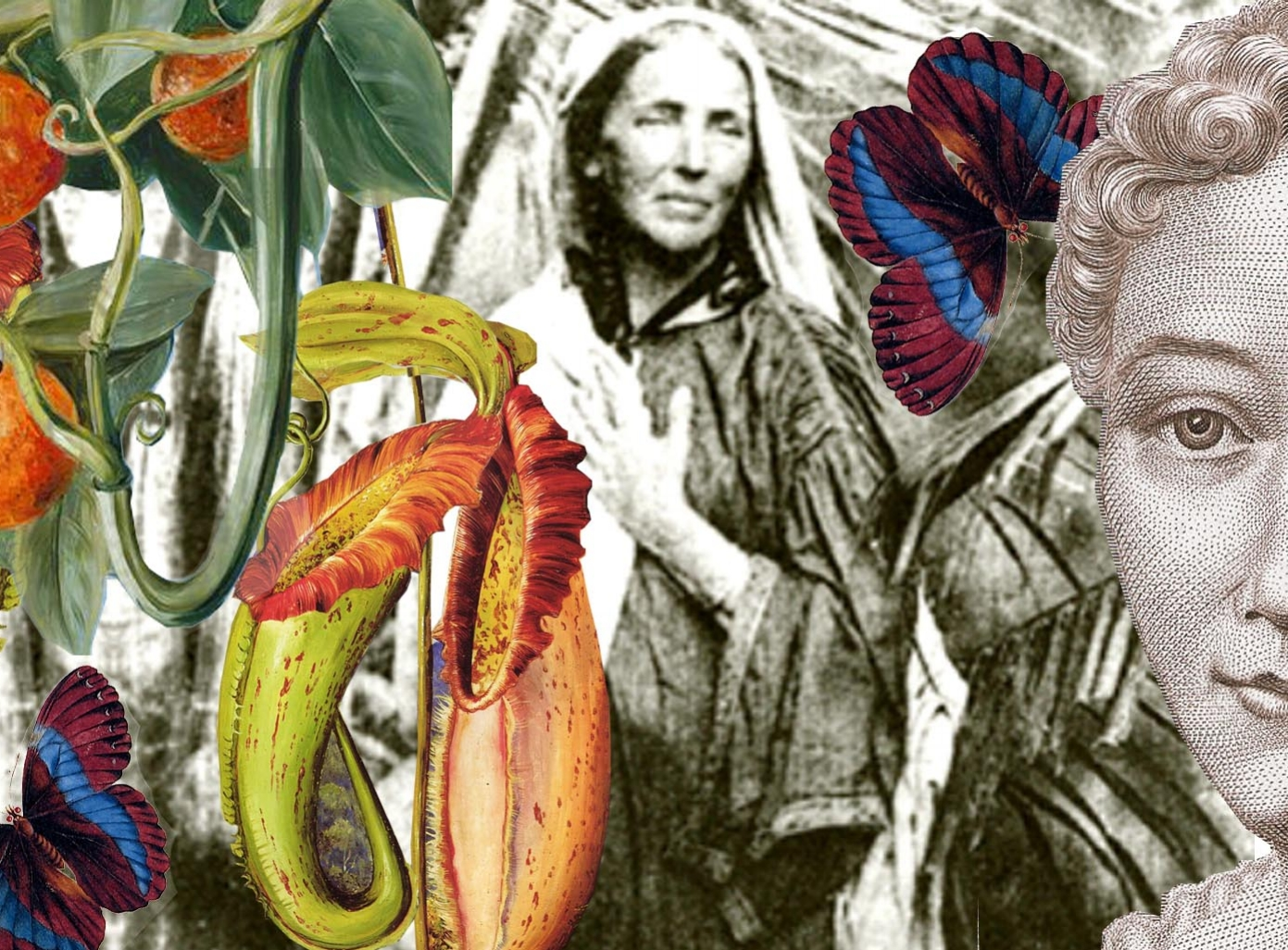 A FEMINIST'S GUIDE TO BOTANY -