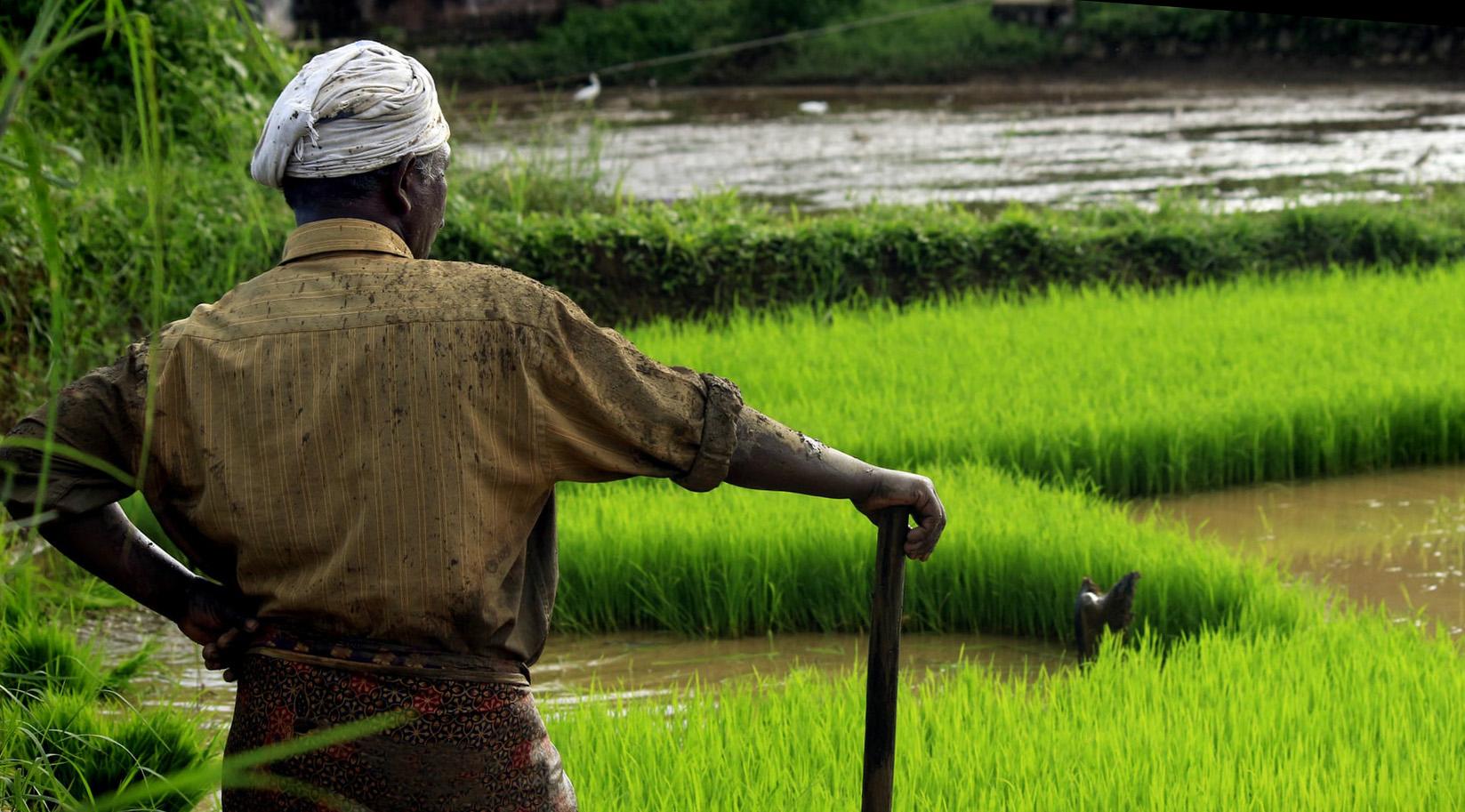 indianfarmer.jpg