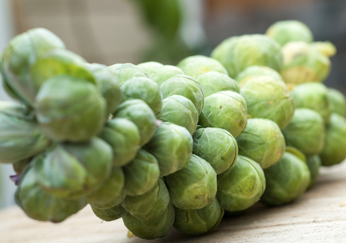 brussels_sprouts_stalk.jpg