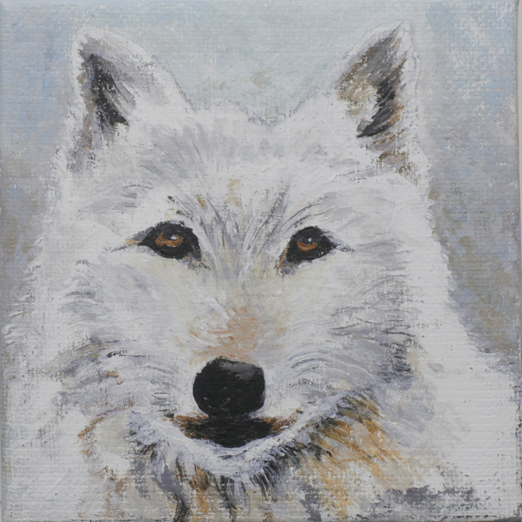 ARCTIC WOLF - Kathleen Bond