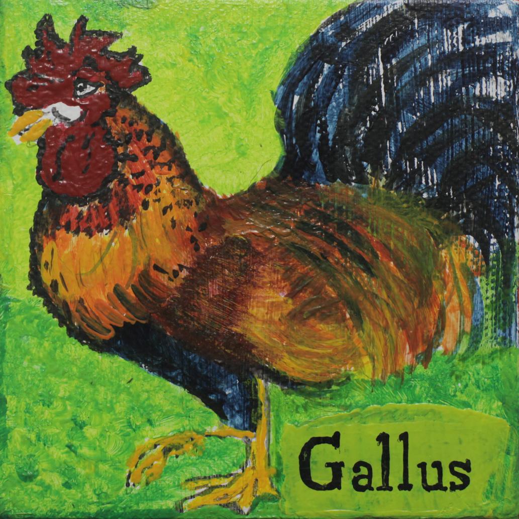 GALLUS - Thomas Kreft