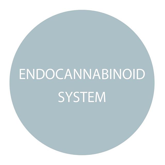 Did you know you have an endocannabinoid system with receptors throughout your entire body? Through those receptors, the ECS can help regulate crucial functions, such as:  Appetite, digestion, immune function, inflammation, mood, sleep, reproduction/fertility, temperature regulation, memory and pain.  By stimulating your endocannabinoid system with external cannabinoids, like CBD, you can help your body get back to homeostasis and begin healing!  #cbd #endocannabinoidsystem #cbdoil #hempheals