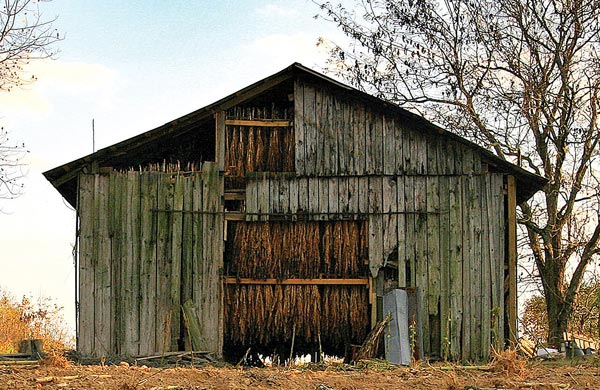 tobacco-barns-sm.jpg