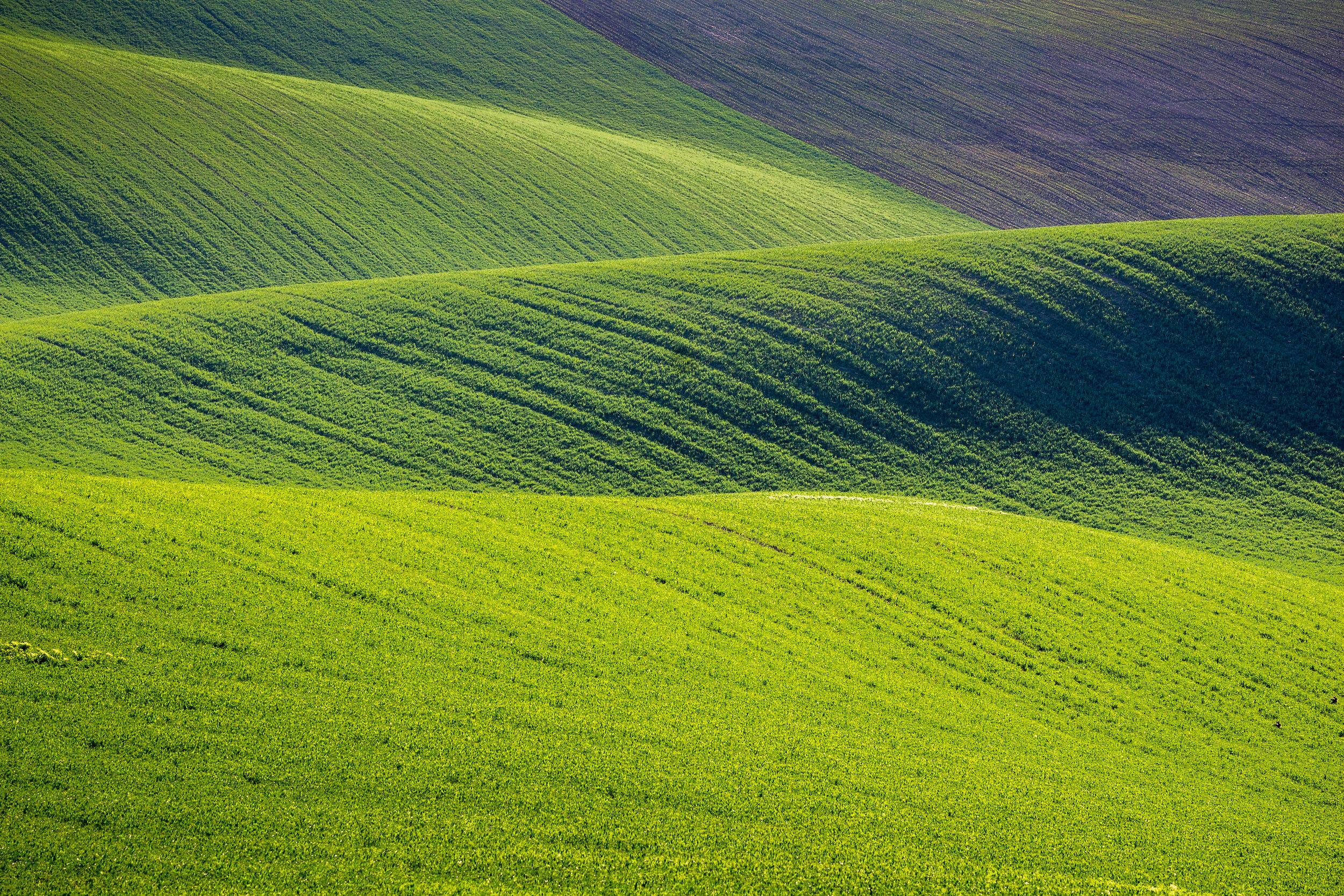 velvet green rolling hills.jpg