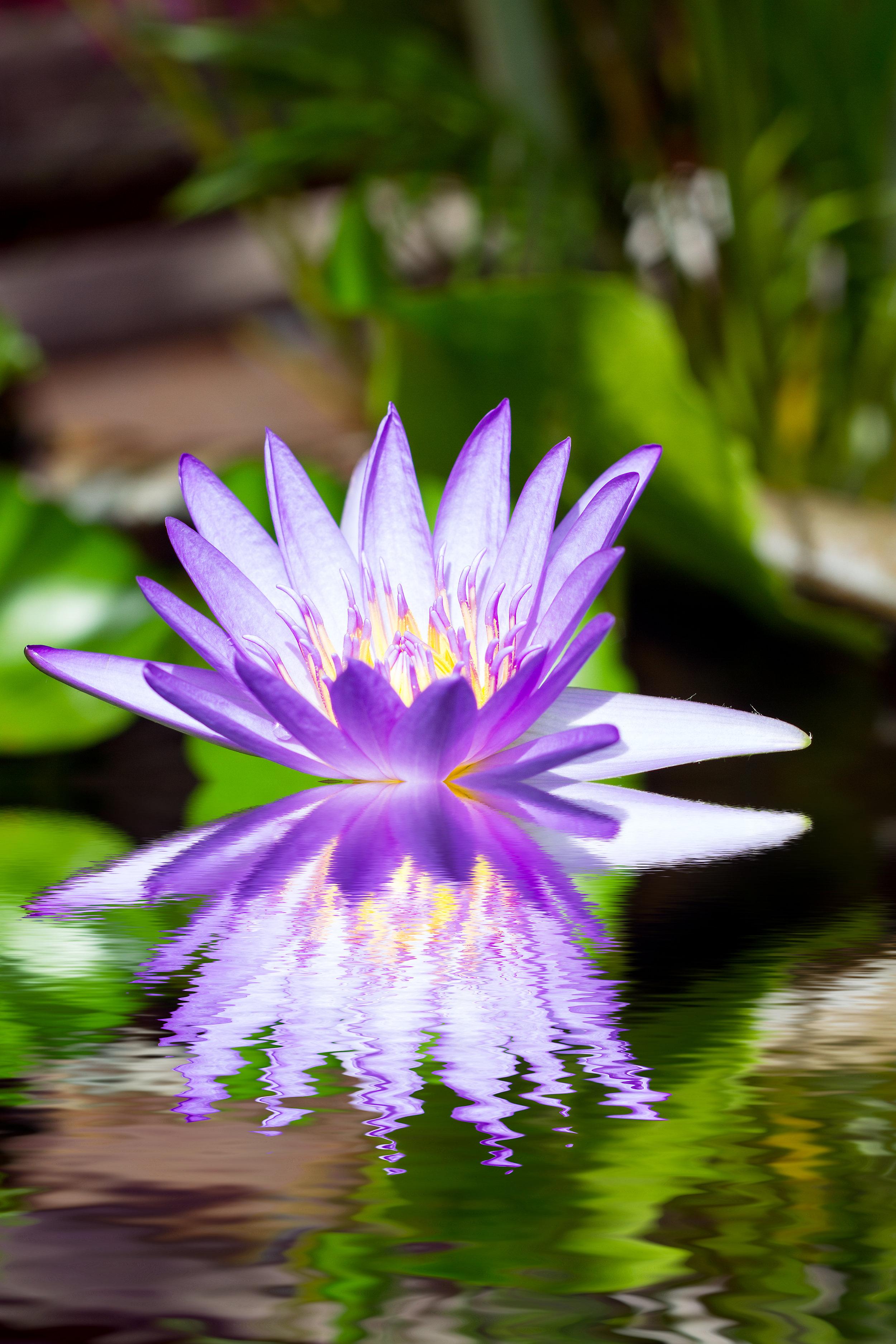 illuminated purple loctus reflection small.jpg