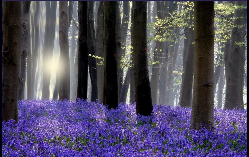 bluebell backlit.jpg