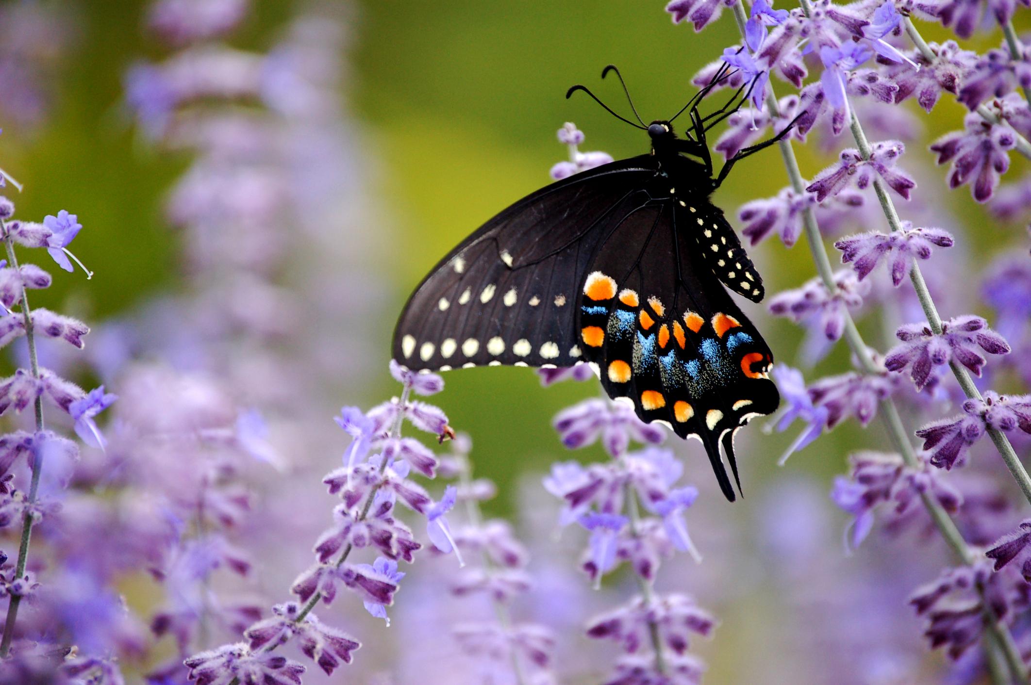 butterfly pix.jpg