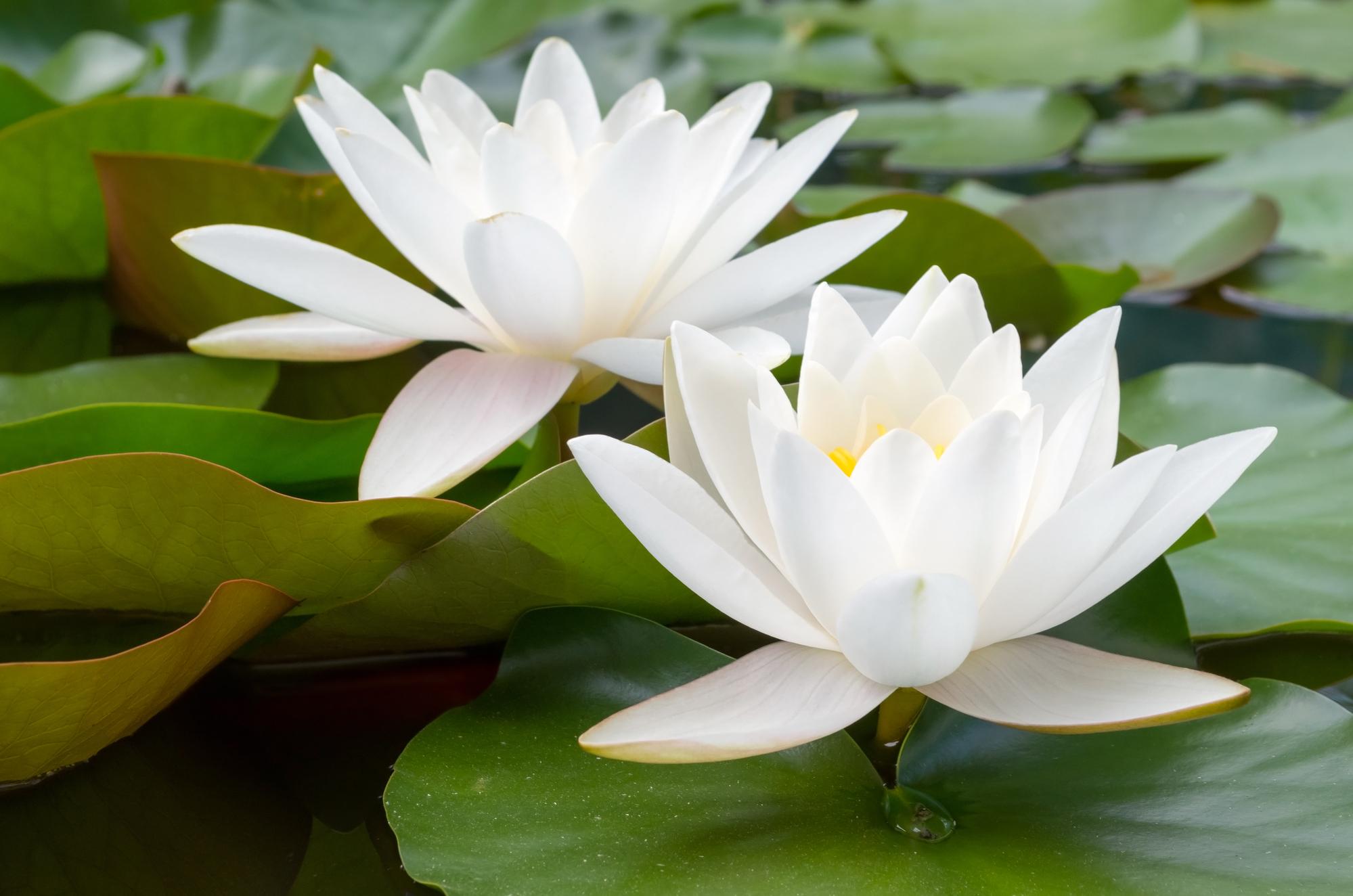 simple blush pink lotus green background.jpg