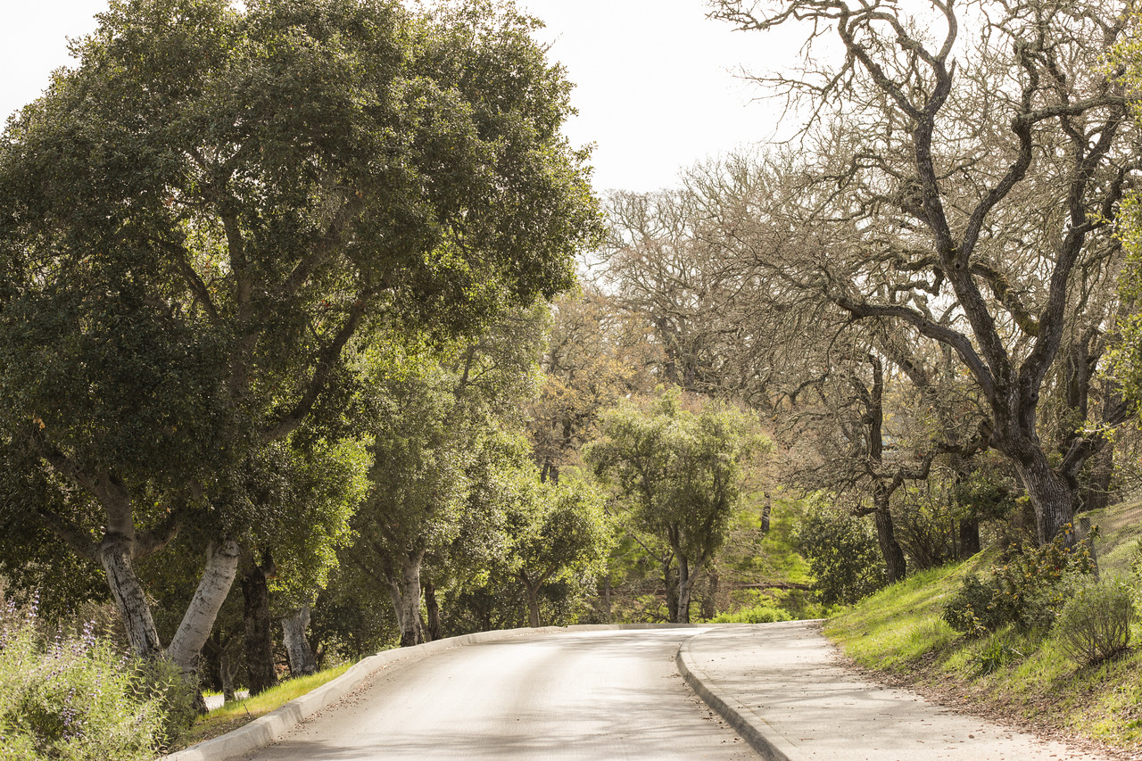 Portola Valley Ranch Blu Skye Media-8702-X2.jpg