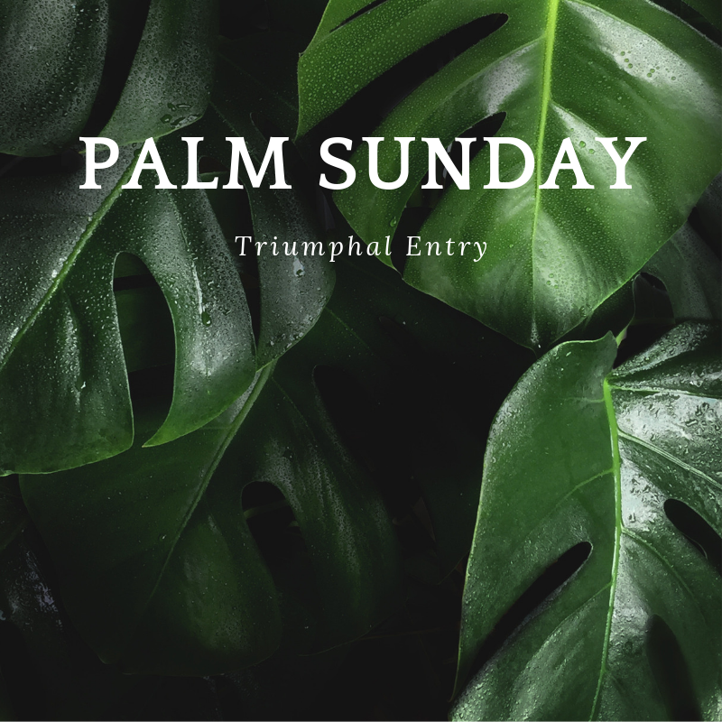 what happened on palm sunday .png