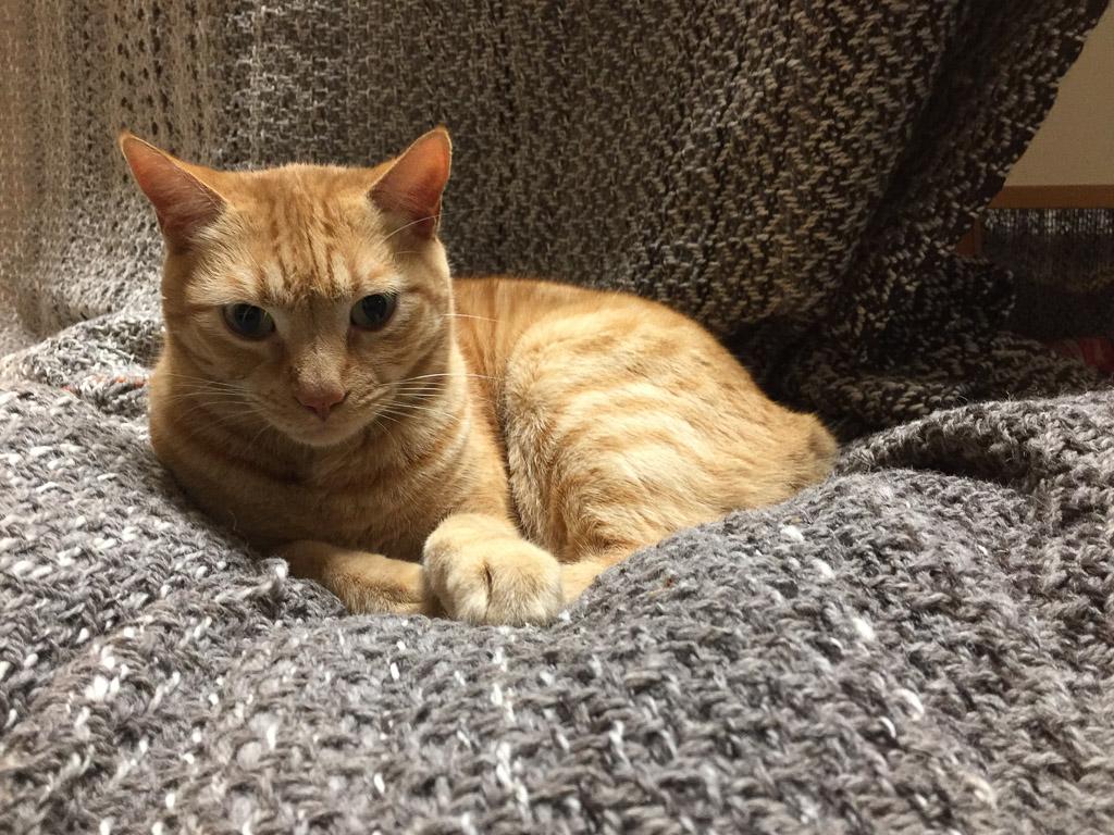 cat_on_blanket.jpg