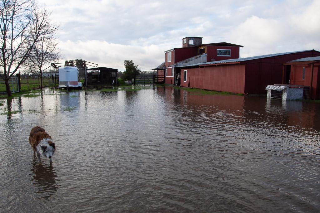 flooded_property.jpg