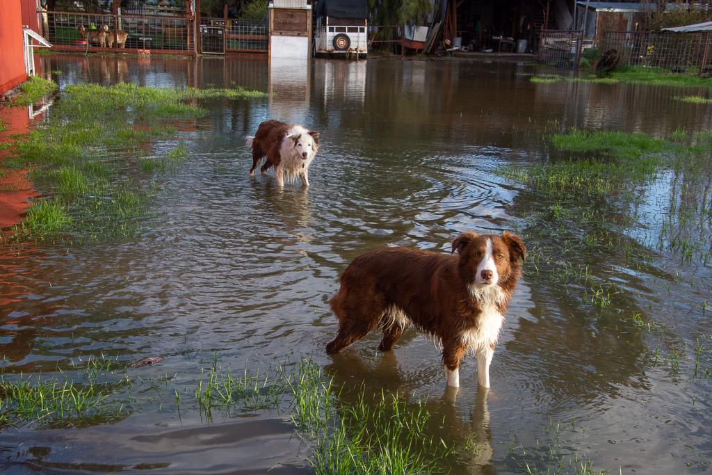 dogs_in_water.jpg