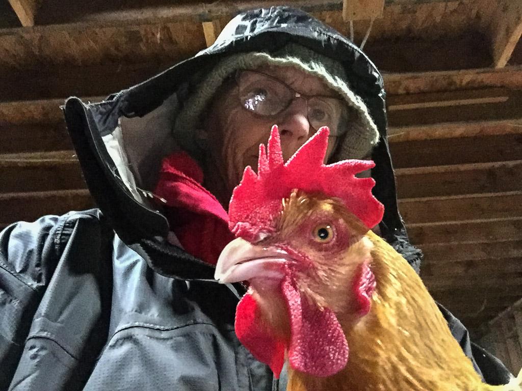 chicken_selfie.jpg