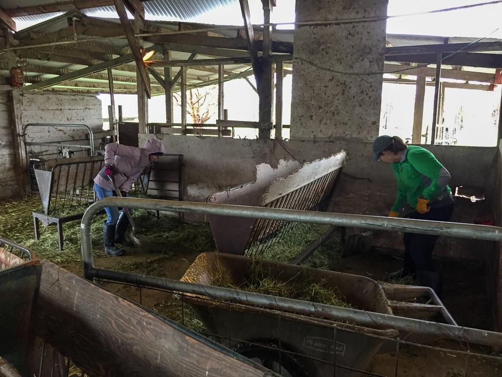 farm club cleaning the barn.jpg