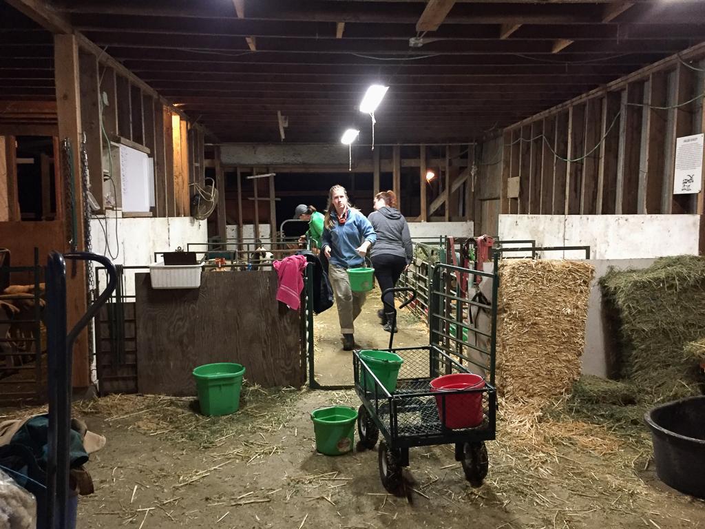 farm club cleaning barn.jpg