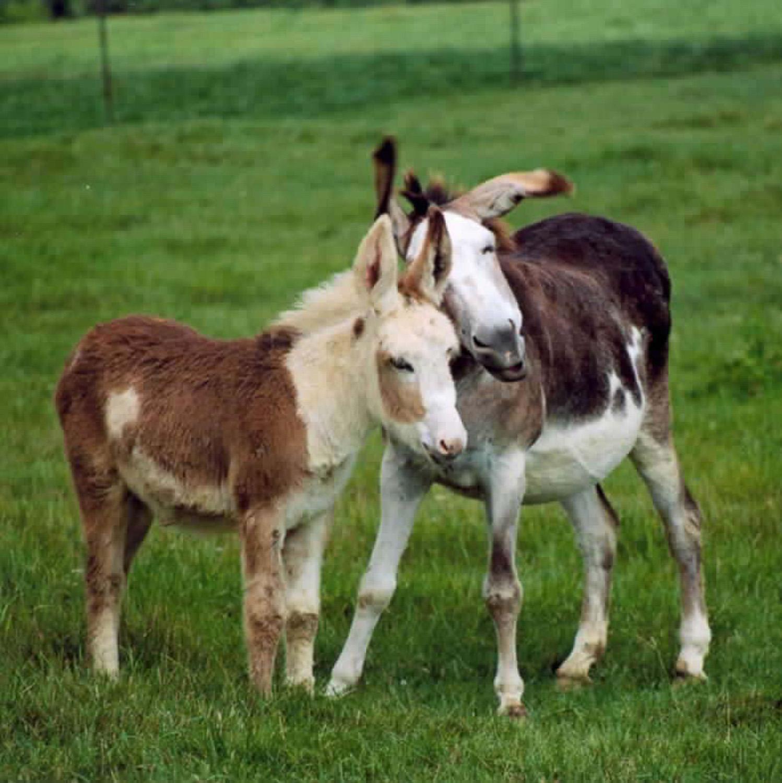 Donkey mom and baby.