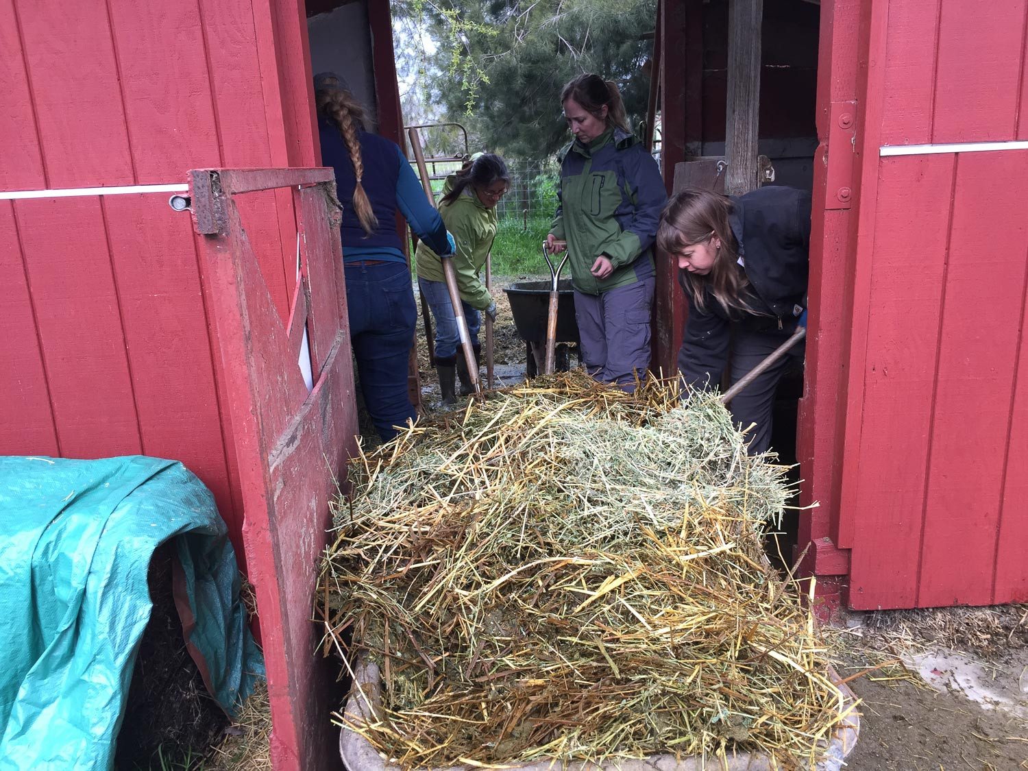 Farm Club members cleaning the ram pen.