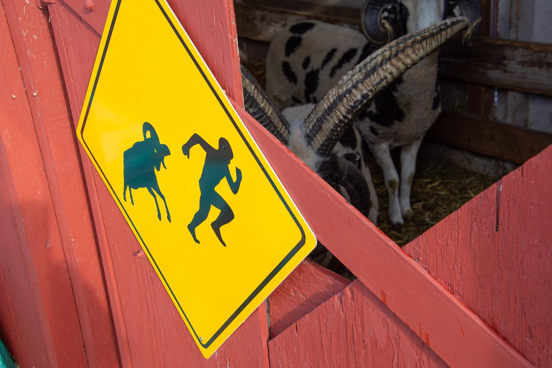 Ram caution sign.