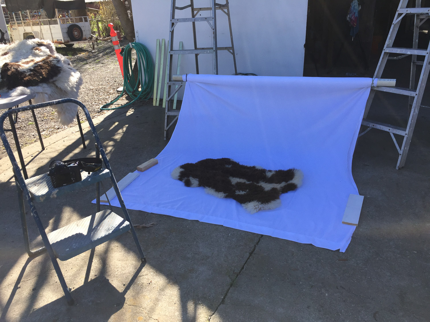 Photographing sheepskins.
