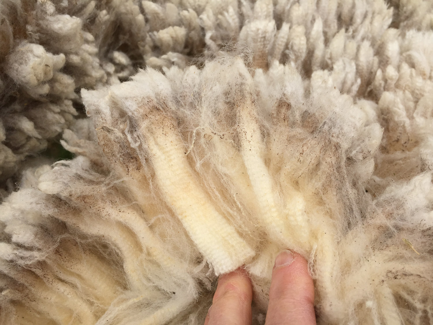 Staples of Timm Ranch fleece.