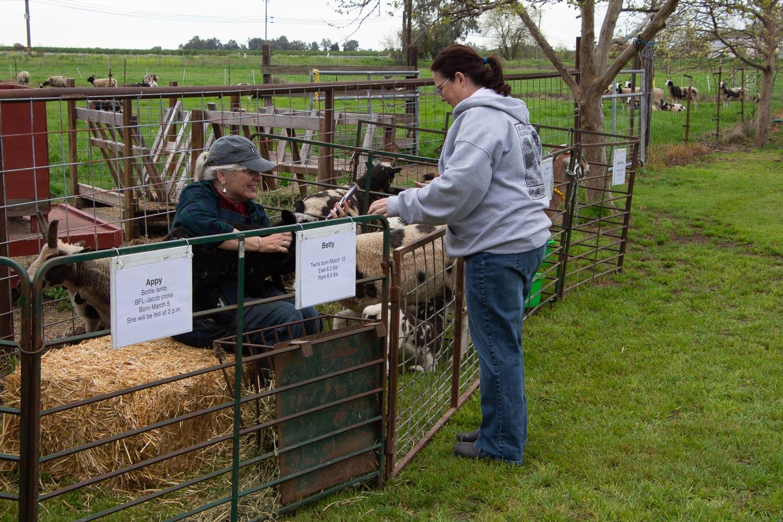 Farm Club at Meet the Sheep