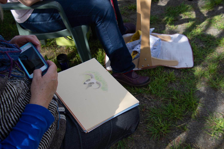 Alison drawing sheep