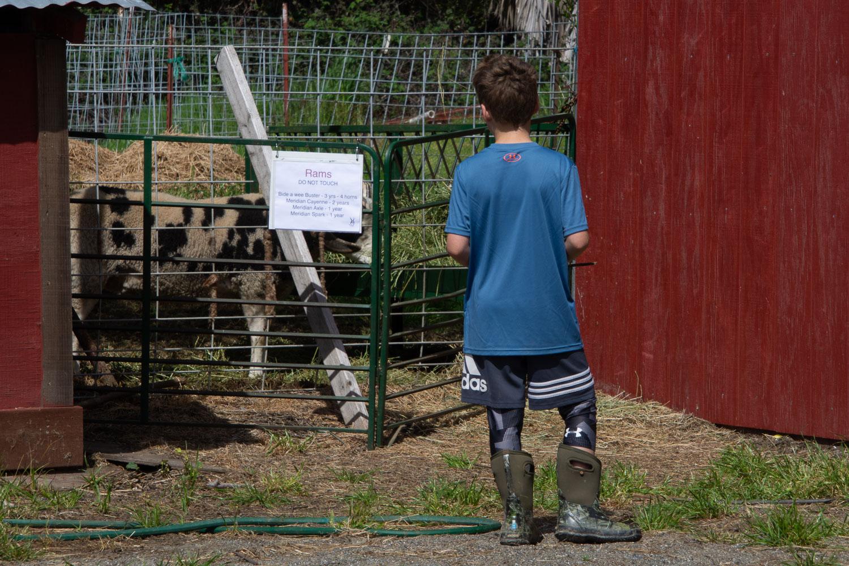 Boy watching the rams.