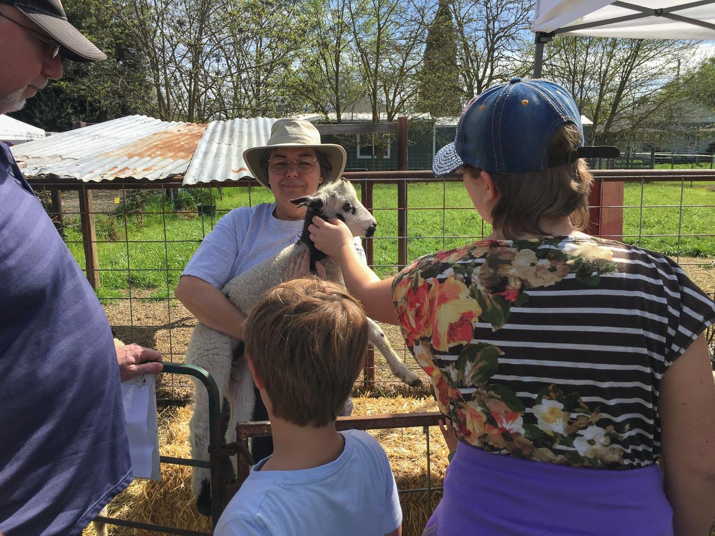 Public petting Jacob lamb.