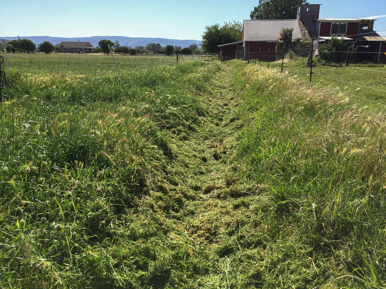 Irrigation ditch after weed eating