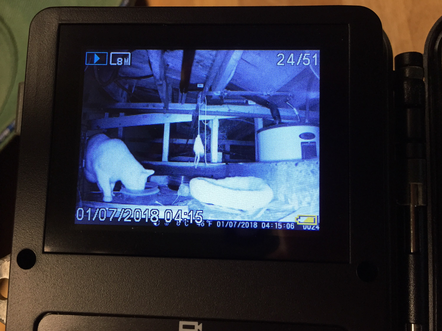 Game camera view of cat under house.