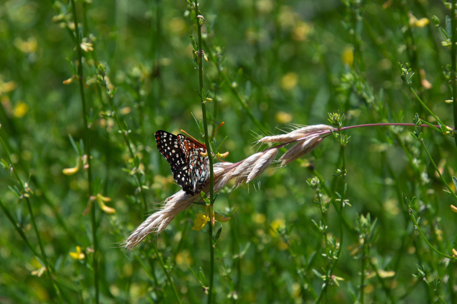 butterfly in stebbins cold canyon